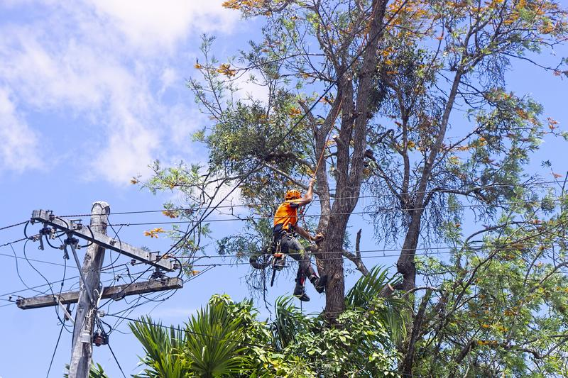 Bartow-Polk County FL Tree Trimming and Stump Grinding Services-We Offer Tree Trimming Services, Tree Removal, Tree Pruning, Tree Cutting, Residential and Commercial Tree Trimming Services, Storm Damage, Emergency Tree Removal, Land Clearing, Tree Companies, Tree Care Service, Stump Grinding, and we're the Best Tree Trimming Company Near You Guaranteed!
