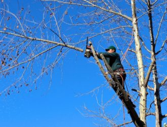 Contact Us-Polk County FL Tree Trimming and Stump Grinding Services-We Offer Tree Trimming Services, Tree Removal, Tree Pruning, Tree Cutting, Residential and Commercial Tree Trimming Services, Storm Damage, Emergency Tree Removal, Land Clearing, Tree Companies, Tree Care Service, Stump Grinding, and we're the Best Tree Trimming Company Near You Guaranteed!