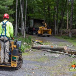 Emergency Tree Removal-Polk County FL Tree Trimming and Stump Grinding Services-We Offer Tree Trimming Services, Tree Removal, Tree Pruning, Tree Cutting, Residential and Commercial Tree Trimming Services, Storm Damage, Emergency Tree Removal, Land Clearing, Tree Companies, Tree Care Service, Stump Grinding, and we're the Best Tree Trimming Company Near You Guaranteed!