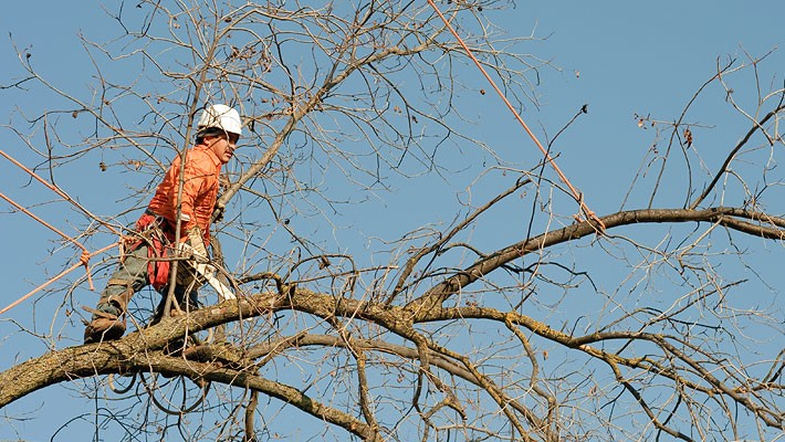 Haines City-Polk County FL Tree Trimming and Stump Grinding Services-We Offer Tree Trimming Services, Tree Removal, Tree Pruning, Tree Cutting, Residential and Commercial Tree Trimming Services, Storm Damage, Emergency Tree Removal, Land Clearing, Tree Companies, Tree Care Service, Stump Grinding, and we're the Best Tree Trimming Company Near You Guaranteed!