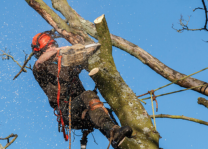 Lakeland-Polk County FL Tree Trimming and Stump Grinding Services-We Offer Tree Trimming Services, Tree Removal, Tree Pruning, Tree Cutting, Residential and Commercial Tree Trimming Services, Storm Damage, Emergency Tree Removal, Land Clearing, Tree Companies, Tree Care Service, Stump Grinding, and we're the Best Tree Trimming Company Near You Guaranteed!