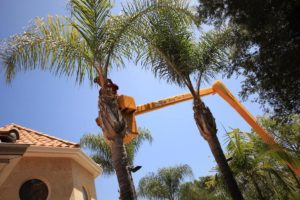 Palm Tree Trimming-Polk County FL Tree Trimming and Stump Grinding Services-We Offer Tree Trimming Services, Tree Removal, Tree Pruning, Tree Cutting, Residential and Commercial Tree Trimming Services, Storm Damage, Emergency Tree Removal, Land Clearing, Tree Companies, Tree Care Service, Stump Grinding, and we're the Best Tree Trimming Company Near You Guaranteed!