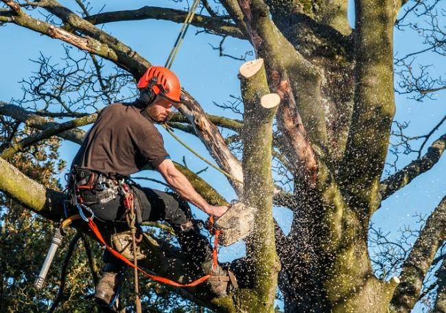 Polk City-Polk County FL Tree Trimming and Stump Grinding Services-We Offer Tree Trimming Services, Tree Removal, Tree Pruning, Tree Cutting, Residential and Commercial Tree Trimming Services, Storm Damage, Emergency Tree Removal, Land Clearing, Tree Companies, Tree Care Service, Stump Grinding, and we're the Best Tree Trimming Company Near You Guaranteed!