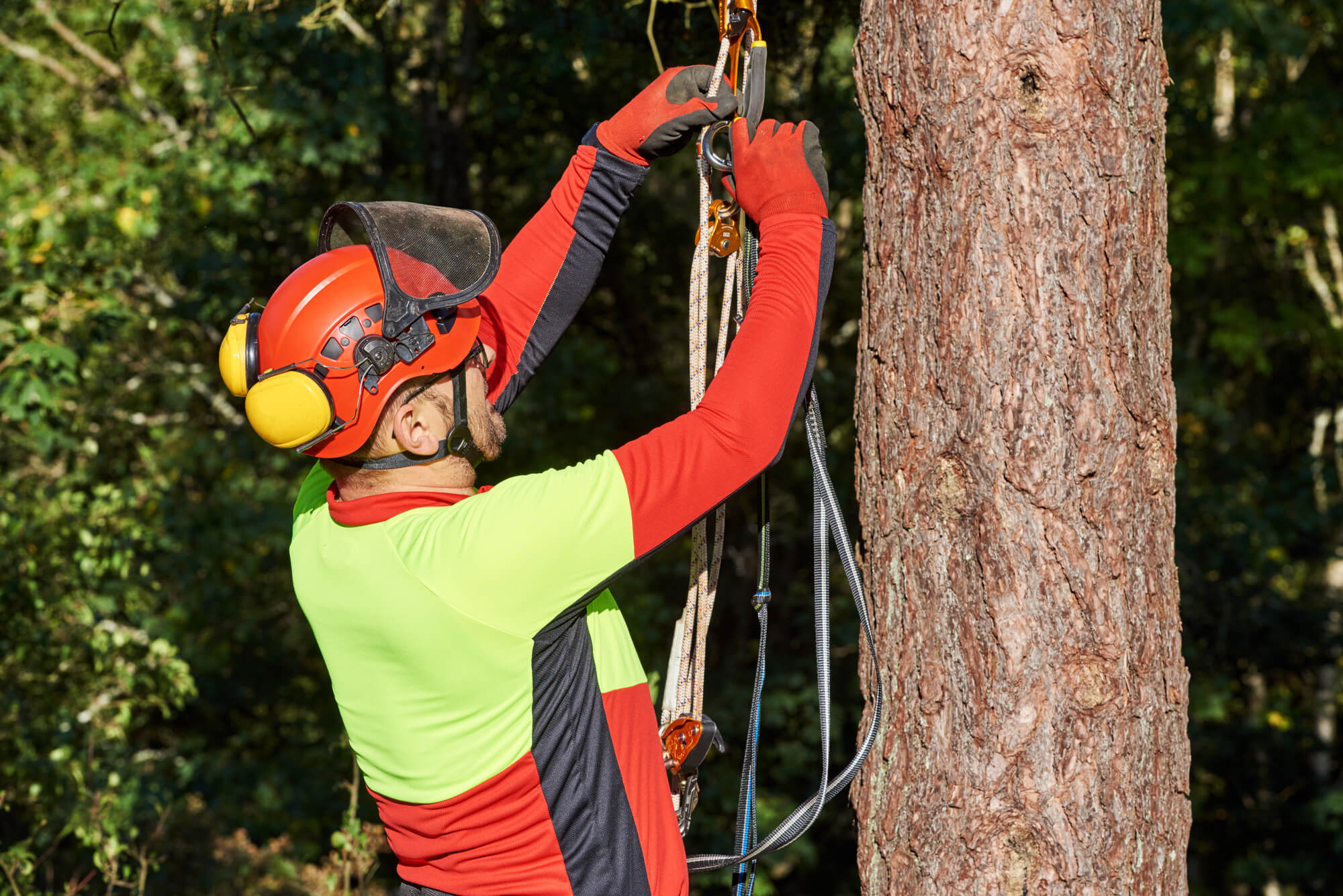 Polk County FL Tree Trimming and Stump Grinding Services Header Image-We Offer Tree Trimming Services, Tree Removal, Tree Pruning, Tree Cutting, Residential and Commercial Tree Trimming Services, Storm Damage, Emergency Tree Removal, Land Clearing, Tree Companies, Tree Care Service, Stump Grinding, and we're the Best Tree Trimming Company Near You Guaranteed!