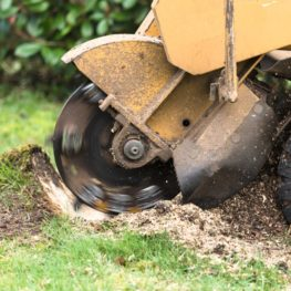 Stump Grinding-Polk County FL Tree Trimming and Stump Grinding Services-We Offer Tree Trimming Services, Tree Removal, Tree Pruning, Tree Cutting, Residential and Commercial Tree Trimming Services, Storm Damage, Emergency Tree Removal, Land Clearing, Tree Companies, Tree Care Service, Stump Grinding, and we're the Best Tree Trimming Company Near You Guaranteed!