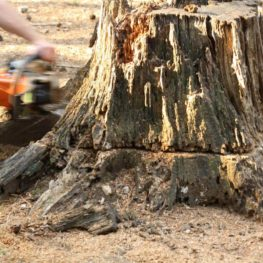 Stump Removal-Polk County FL Tree Trimming and Stump Grinding Services-We Offer Tree Trimming Services, Tree Removal, Tree Pruning, Tree Cutting, Residential and Commercial Tree Trimming Services, Storm Damage, Emergency Tree Removal, Land Clearing, Tree Companies, Tree Care Service, Stump Grinding, and we're the Best Tree Trimming Company Near You Guaranteed!