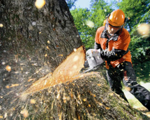 Tree Cutting-Polk County FL Tree Trimming and Stump Grinding Services-We Offer Tree Trimming Services, Tree Removal, Tree Pruning, Tree Cutting, Residential and Commercial Tree Trimming Services, Storm Damage, Emergency Tree Removal, Land Clearing, Tree Companies, Tree Care Service, Stump Grinding, and we're the Best Tree Trimming Company Near You Guaranteed!
