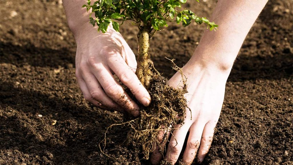 Tree Planting-Polk County FL Tree Trimming and Stump Grinding Services-We Offer Tree Trimming Services, Tree Removal, Tree Pruning, Tree Cutting, Residential and Commercial Tree Trimming Services, Storm Damage, Emergency Tree Removal, Land Clearing, Tree Companies, Tree Care Service, Stump Grinding, and we're the Best Tree Trimming Company Near You Guaranteed!