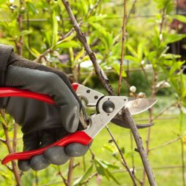 Tree Pruning-Polk County FL Tree Trimming and Stump Grinding Services-We Offer Tree Trimming Services, Tree Removal, Tree Pruning, Tree Cutting, Residential and Commercial Tree Trimming Services, Storm Damage, Emergency Tree Removal, Land Clearing, Tree Companies, Tree Care Service, Stump Grinding, and we're the Best Tree Trimming Company Near You Guaranteed!