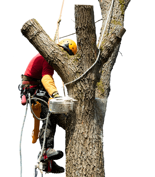 tree arborist-Polk County FL Tree Trimming and Stump Grinding Services-We Offer Tree Trimming Services, Tree Removal, Tree Pruning, Tree Cutting, Residential and Commercial Tree Trimming Services, Storm Damage, Emergency Tree Removal, Land Clearing, Tree Companies, Tree Care Service, Stump Grinding, and we're the Best Tree Trimming Company Near You Guaranteed!